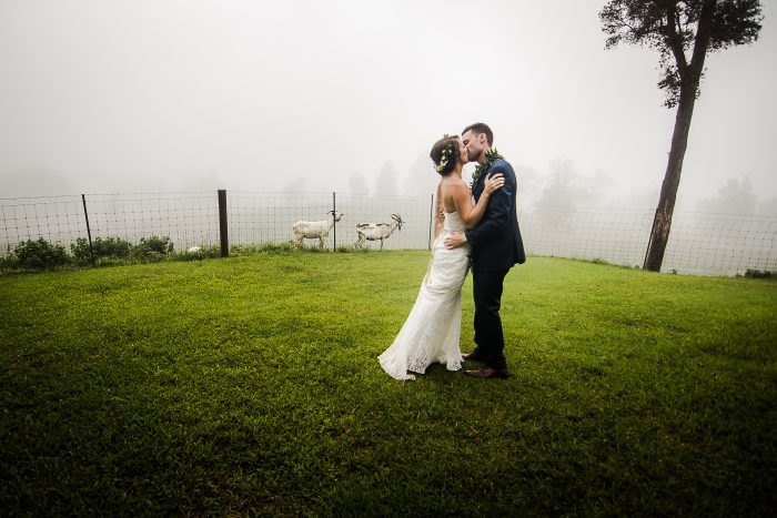 goats, farm, rustic, big island, wedding